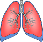 lungs-154282__340