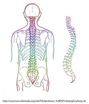 spine-257870__340